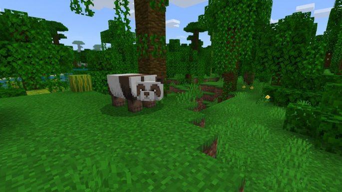 floresta do panda seed