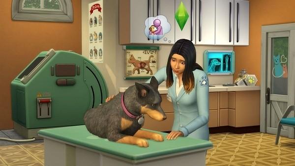gatos e cães