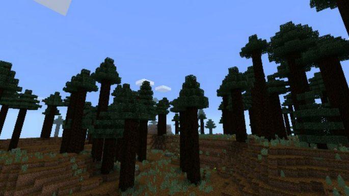 Seed selva de recursos